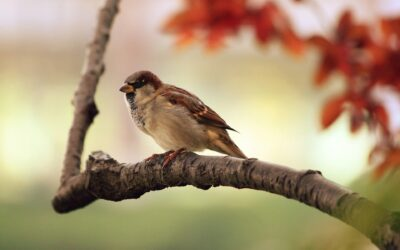 ¿Quieres ser ornitólogo por un día?